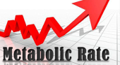 metabolic-rate